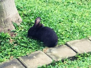 Bali - vidi boutique hôtel lapin noir xpro