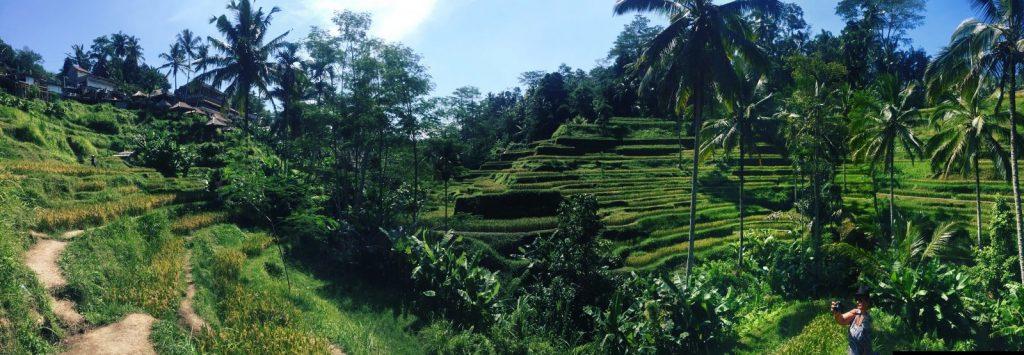 Bali - Rizières de Tegalalang letitrain