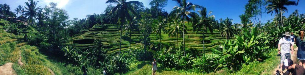 Bali - Rizières de Bali