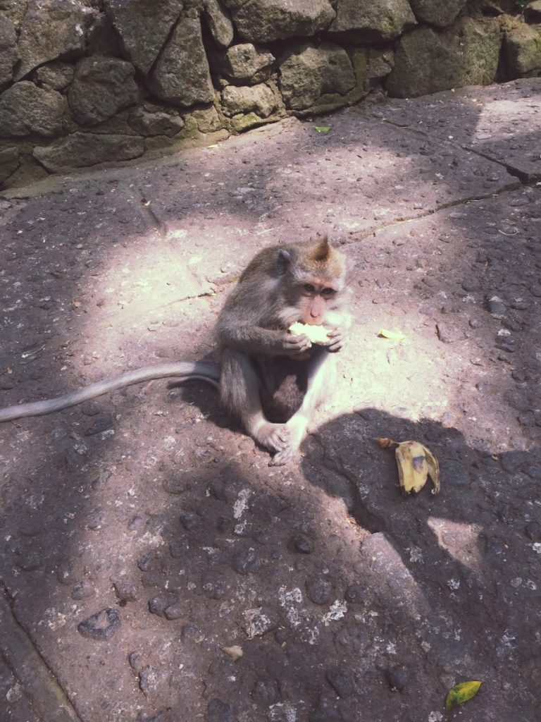 Bali - Monkey forest Ubud _1977