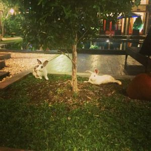 Bali - Vidi boutique hôtel lapins