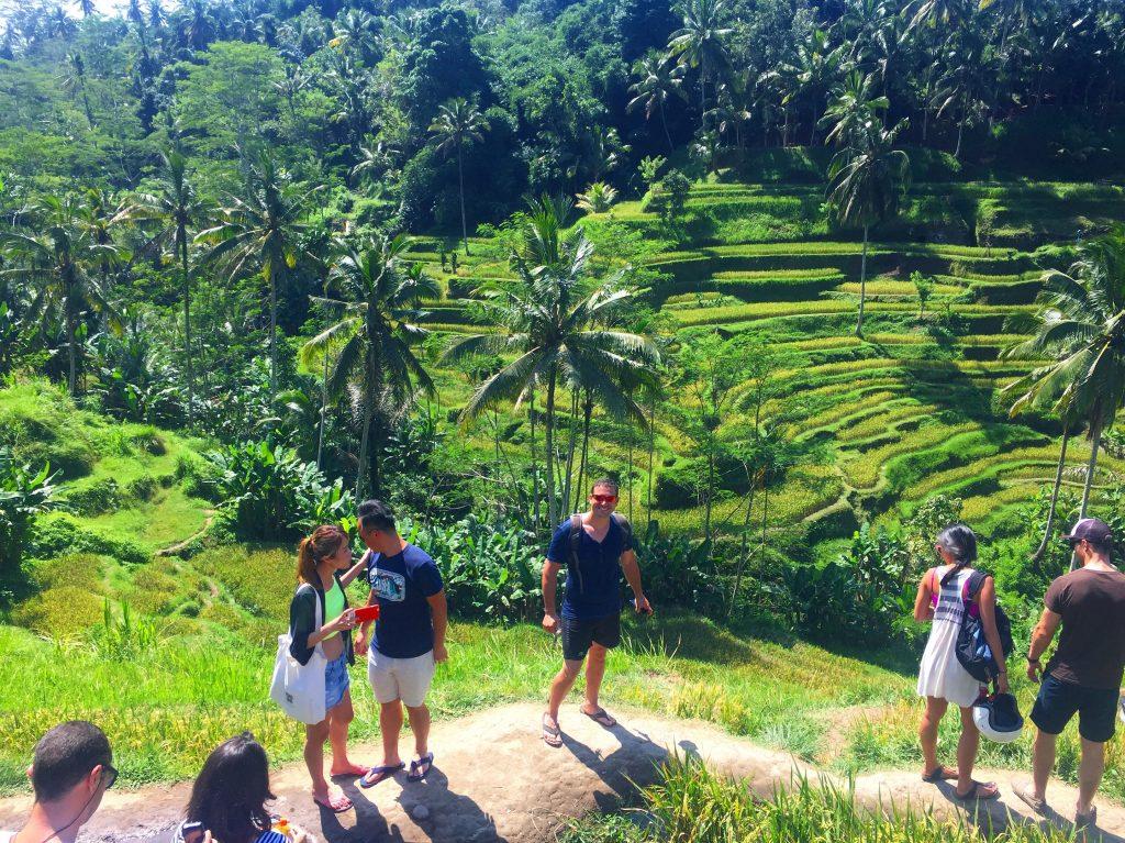 Bali - Rizières de Tegalalang