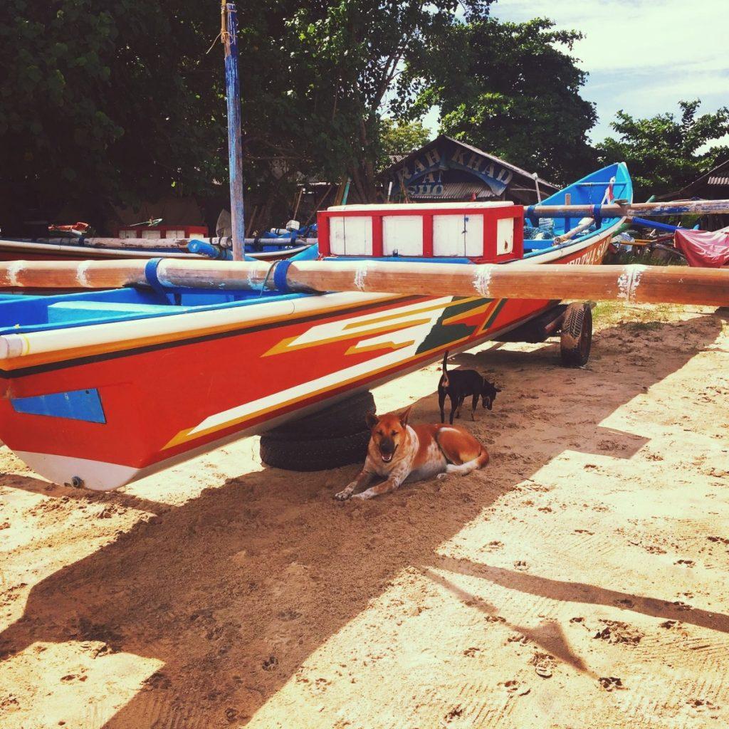 Bali - chiens