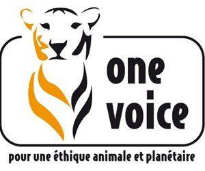 one-voice+3002503